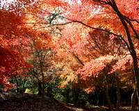 一碧湖周辺の紅葉