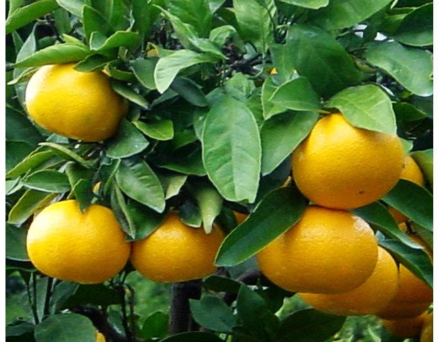 「伊豆フルーツパーク」の画像検索結果