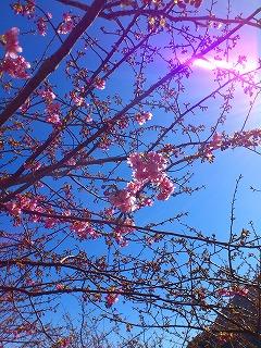 春3.jpg