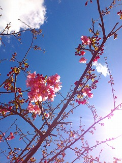 春4.jpg