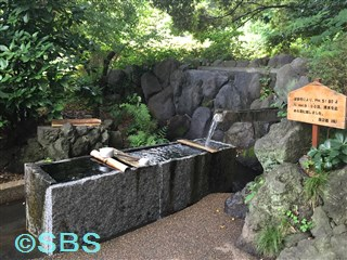 2015.6.30 柿田川公園 (2).jpg