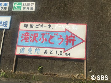 2016.8.11 ピオーネ狩り (1).jpg