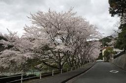 県立天竜高春野校舎正門前.jpg
