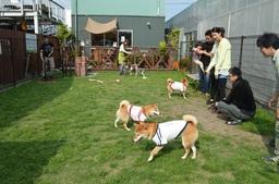 20140530webdogrun.jpg
