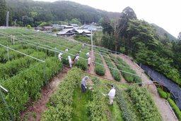 つちや農園1.jpg