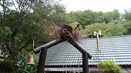 鳥の巣入り口.jpg