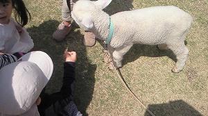 日本平羊写真.jpg