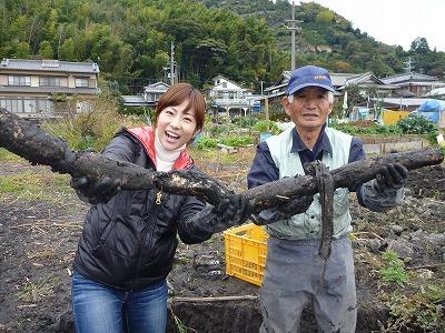 レンコン収穫.jpg