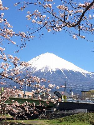 富士と桜.jpg