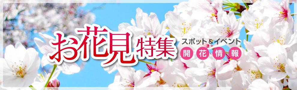 お花見特集2019