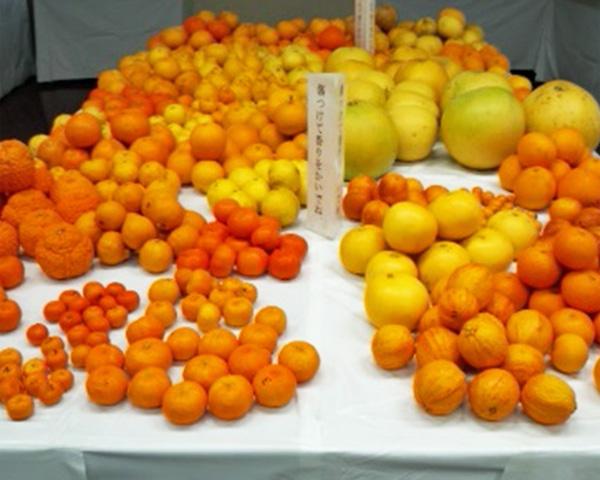 We open citrus fruit study power base to the public