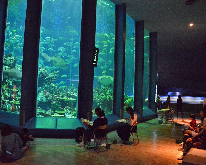 【개최 연기·일정 미정】도카이 대학 해양과학 박물관 제49회 바다 노하쿠브트칸 사생 대회