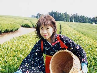お茶摘み体験<五月園>