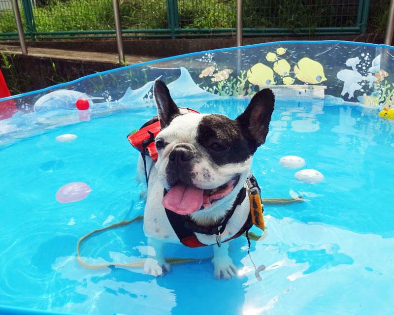 Trung tâm phúc lợi động vật Dog Pool Day