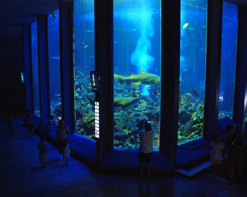 Event of the Tokai University oceanography Museum summer of 2019