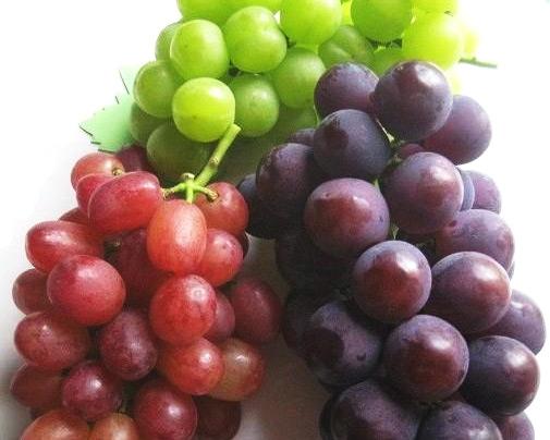 Grape picking <Otsuka vineyard>