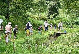 Firefly admiration of Shimizu, Shizuoka-shi Forest Park