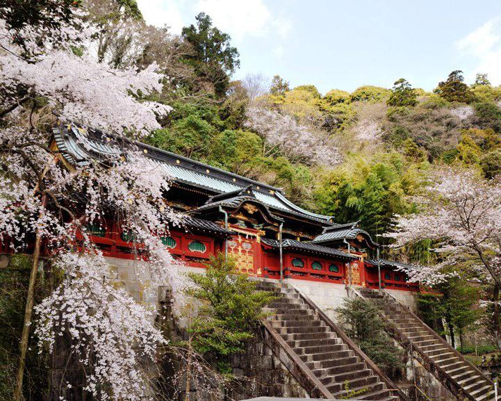 Cherry blossoms of Shizuoka Asama Shrine