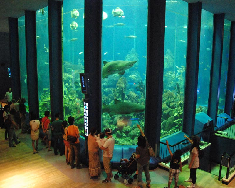 "Tokai University oceanography Museum temporary exhibition ""small sea - in the sea and aquarium - aquarium"""