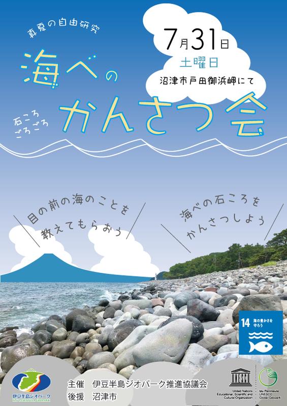 真夏の自由研究 海べのかんさつ会