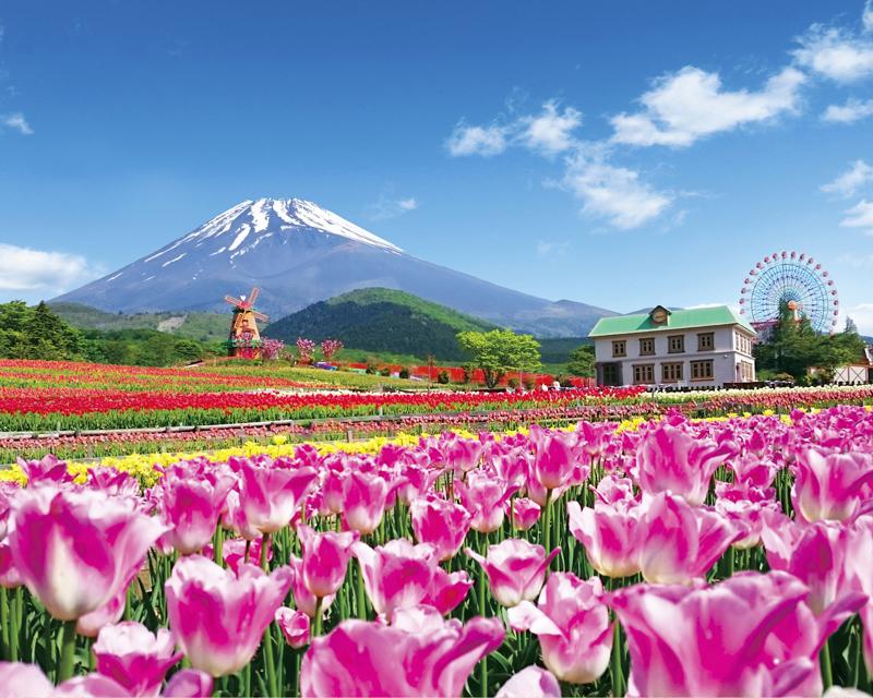 富士 サファリパーク 雨 の 日