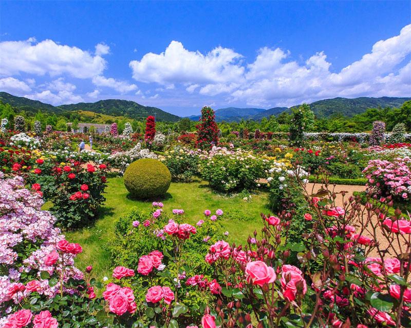 「河津バガテル公園」の画像検索結果